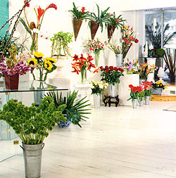 Starting a flower shop can give you success phb news for Flower shop design layouts