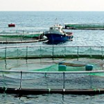 Journal of Aquaculture Research & Development | OMICS Group