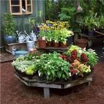 Online Nursery – Buying Houseplants