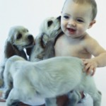 Pet Separation Anxiety Training in New York City