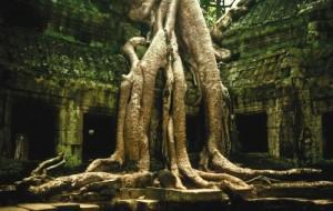 Jungle-Temple
